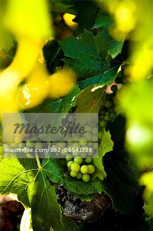 Wine production in Bonnieux, Vaucluse, Provence, France Stock Photo - Rights-Managed, Image code: 862-06541738