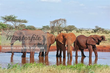 Elephants watering at Ngutuni which is adjacent to Tsavo East National Park. Stock Photo - Rights-Managed, Image code: 862-06542166
