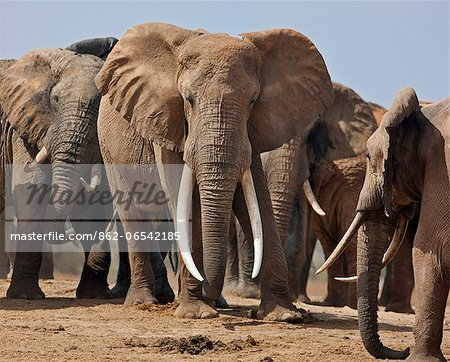 Elephants at a waterhole in Tsavo East National Park. Stock Photo - Rights-Managed, Image code: 862-06542185