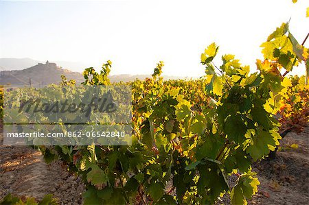 Vineyards around the town of San Vicente de la Sonsierra, on the border of La Rioja and the Basque Country. Spain, Europe. Stock Photo - Rights-Managed, Image code: 862-06542840