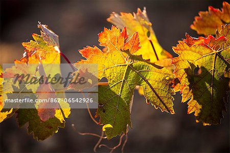 Vineyard in Laguardia, La Rioja, Spain, Europe Stock Photo - Rights-Managed, Image code: 862-06542926