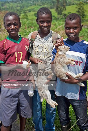 Young boys take rabbits and a guinea pig to sell at a roadside market on the road between Fort Portal and Kasese, Uganda, Africa Stock Photo - Rights-Managed, Image code: 862-06543209