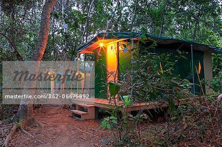 South America, Brazil, Mato Grosso, Pantanal, the Pantanal Nature jaguar camp in Porto Jofre in the Parque Estadual Encontro das Aguas Stock Photo - Rights-Managed, Image code: 862-06675892
