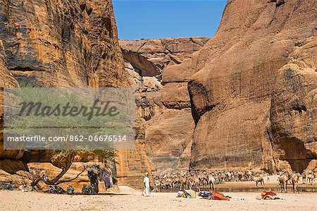 Chad, Wadi Archei, Ennedi, Sahara.  A large herd of camels watering at Wadi Archei, an important source of permanent water. Stock Photo - Rights-Managed, Image code: 862-06676514