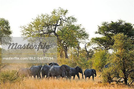 Africa, Namibia, Caprivi, Herd of elephants in the Bwa Bwata National Park Stock Photo - Rights-Managed, Image code: 862-06677194