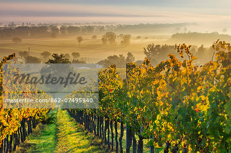 Italy, Umbria, Perugia district. Autumnal Vineyards near Montefalco. Stock Photo - Rights-Managed, Image code: 862-07495940
