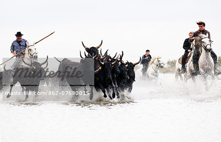 Black bulls of Camargue and their herders running through the water, Camargue, France Stock Photo - Rights-Managed, Image code: 862-07690015