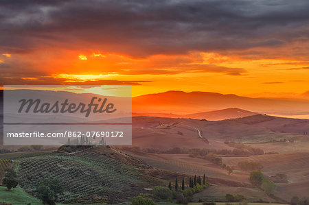 Italy, Tuscany, Siena district, Orcia Valley, Podere Belvedere near San Quirico d'Orcia. Stock Photo - Rights-Managed, Image code: 862-07690172