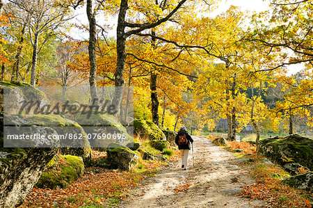 Medieval path with beech trees and chestnut trees in autumn time. Serra da Estrela Nature Park, Portugal (MR) Stock Photo - Rights-Managed, Image code: 862-07690695