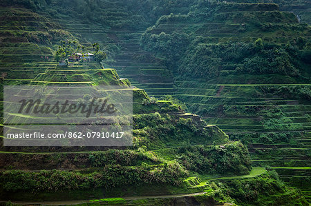 Asia, South East Asia, Philippines, Cordilleras, Banaue; UNESCO World heritage listed Ifugao rice terraces near Banaue Stock Photo - Rights-Managed, Image code: 862-07910417