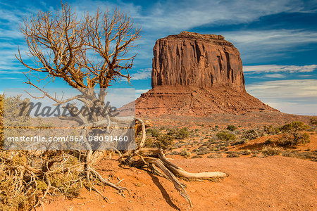 East Mitten Butte, Monument Valley Navajo Tribal Park, Arizona, USA Stock Photo - Rights-Managed, Image code: 862-08091460