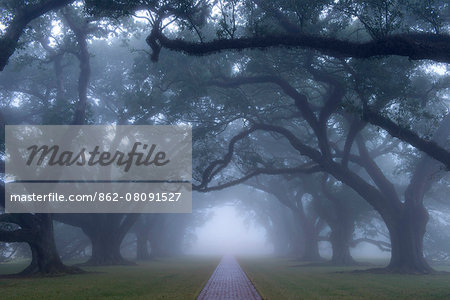 USA, Louisiana, St. James Parish, Vacherie, Oak Alley Plantation Stock Photo - Rights-Managed, Image code: 862-08091527