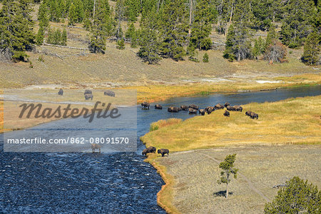 USA, Wyoming, Yellowstone National Park, Bison crossing firehole river Stock Photo - Rights-Managed, Image code: 862-08091570