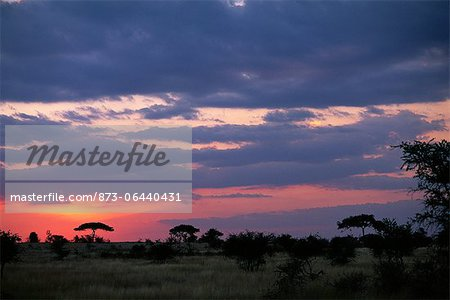Sunset over Field with Acacia Trees, Serengeti, Tanzania Stock Photo - Rights-Managed, Image code: 873-06440431