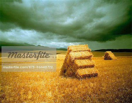 Hay Bales in Landscape South Africa Stock Photo - Rights-Managed, Image code: 873-06440772