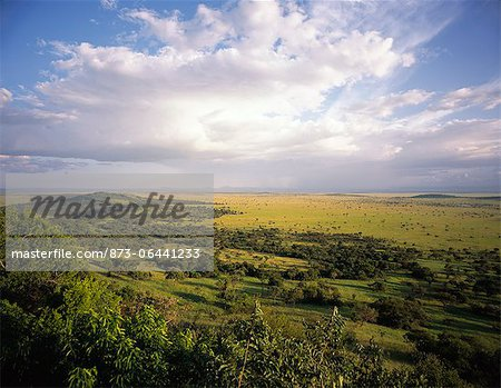 Landscape in the Serengeti, Tanzania Stock Photo - Rights-Managed, Image code: 873-06441233
