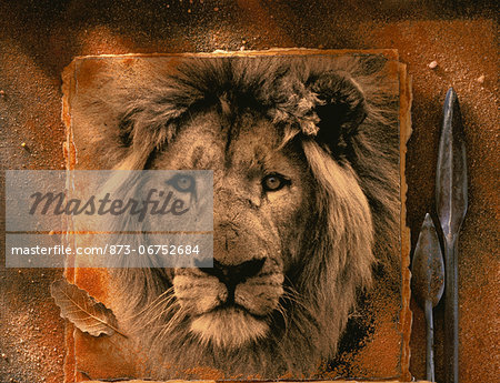 Photograph of Lion with Spear Heads Stock Photo - Rights-Managed, Image code: 873-06752684