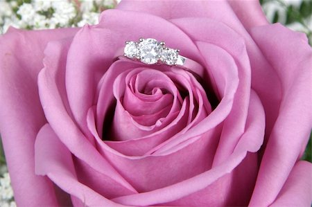 Wedding Ring in Rose, Will you marry me? Stock Photo - Budget Royalty-Free & Subscription, Code: 400-04019647