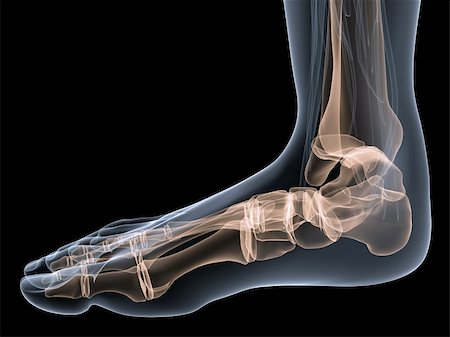 3d rendered anatomy illustration of a transparent human foot Stock Photo - Budget Royalty-Free & Subscription, Code: 400-04075701