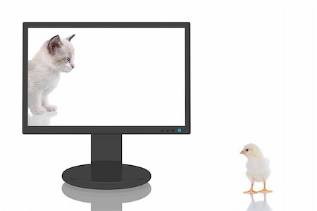 simsearch:400-04399778,k - 3D Render of a computer monitor with a kitten looking to a baby chick outsite. Stock Photo - Budget Royalty-Free & Subscription, Code: 400-04071649