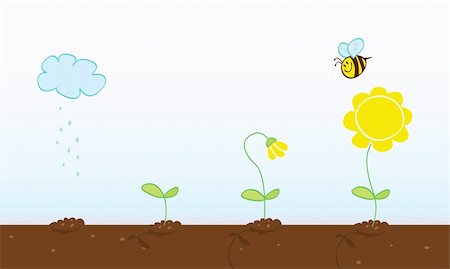 Process of growing plant in four stages. Vector Illustration. Stock Photo - Budget Royalty-Free & Subscription, Code: 400-04115303