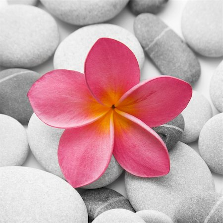 spanishalex (artist) - Nice calm image of beach pebbles with a single pink frangipani flower Stock Photo - Budget Royalty-Free & Subscription, Code: 400-04137818