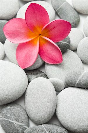 spanishalex (artist) - Nice calm image of beach pebbles with a single pink frangipani flower Stock Photo - Budget Royalty-Free & Subscription, Code: 400-04137819