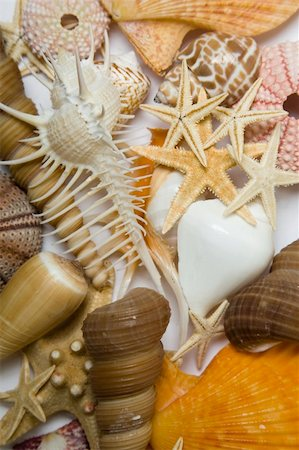 spanishalex (artist) - Assorted seashell background shot in high key Stock Photo - Budget Royalty-Free & Subscription, Code: 400-04139231