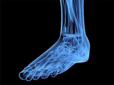 3d rendered x-ray illustration of a human skeletal foot Stock Photo - Budget Royalty-Free & Subscription, Code: 400-04157151