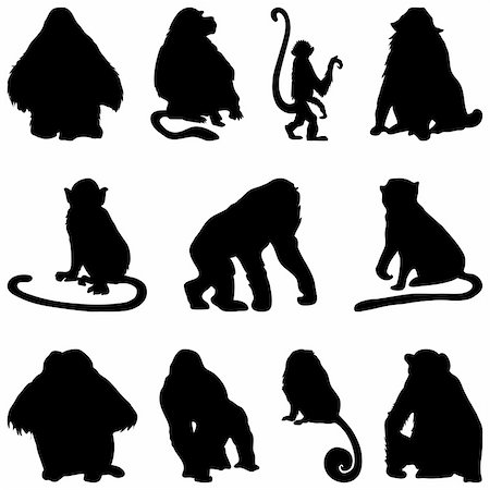 smiling chimpanzee - Collection of apes silhouettes. Vector illustration. Stock Photo - Budget Royalty-Free & Subscription, Code: 400-04150446