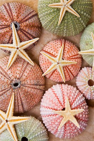 spanishalex (artist) - Different coloured seaurchins with starfish Stock Photo - Budget Royalty-Free & Subscription, Code: 400-04153315