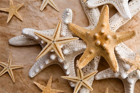 spanishalex (artist) - Varied starfish on old distressed paper in gorgeous light Stock Photo - Budget Royalty-Free & Subscription, Code: 400-04153313