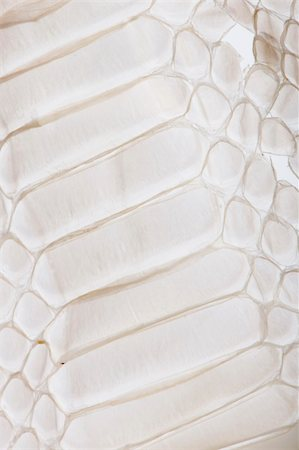 snake skin - Close-up of squamata, scaled reptile Stock Photo - Budget Royalty-Free & Subscription, Code: 400-04165638