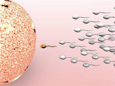 Cartoon illustrating male sperm cells fertilizing a female egg Stock Photo - Budget Royalty-Free & Subscription, Code: 400-04176639