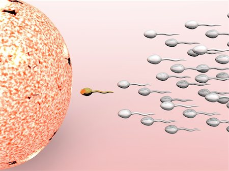 Cartoon illustrating male sperm cells fertilizing a female egg Stock Photo - Budget Royalty-Free & Subscription, Code: 400-04176639