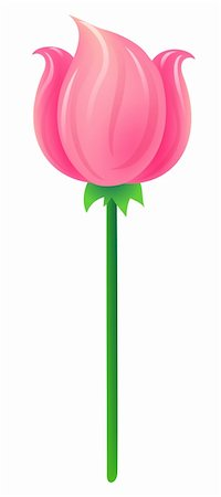 simsearch:400-04697977,k - a pink tulip isolate on the white backgroud Stock Photo - Budget Royalty-Free & Subscription, Code: 400-04177649