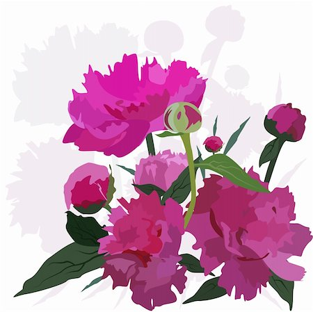 peony illustrations - Peony. Vector floral card. Easy to edit and modify. EPS file included. Stock Photo - Budget Royalty-Free & Subscription, Code: 400-04189744