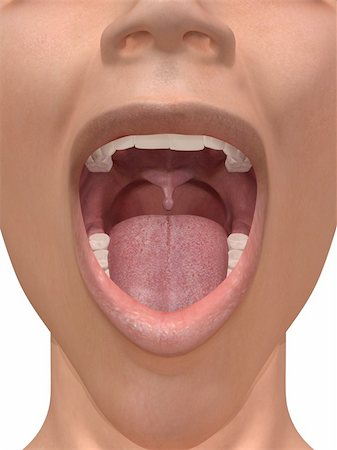 3d rendered illustration of an open mouth Stock Photo - Budget Royalty-Free & Subscription, Code: 400-04189779