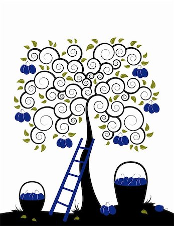 vector plum tree, ladder and baskets of plums on white background, Adobe Illustrator 8 format Stock Photo - Budget Royalty-Free & Subscription, Code: 400-04194937