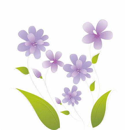 simsearch:400-04697977,k - an illustration drawing of purple daisy  flower Stock Photo - Budget Royalty-Free & Subscription, Code: 400-04197941