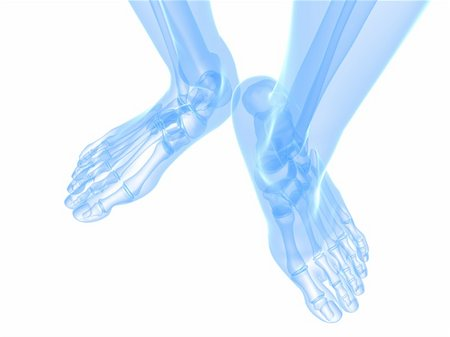 3d rendered illustration of transparent foots with healthy ankles Stock Photo - Budget Royalty-Free & Subscription, Code: 400-04191624