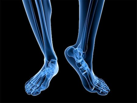 3d rendered illustration of transparent foots with healthy ankles Stock Photo - Budget Royalty-Free & Subscription, Code: 400-04191622