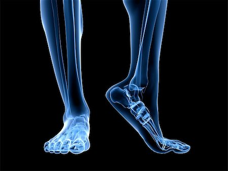 3d rendered illustration of transparent foots with healthy ankles Stock Photo - Budget Royalty-Free & Subscription, Code: 400-04191623