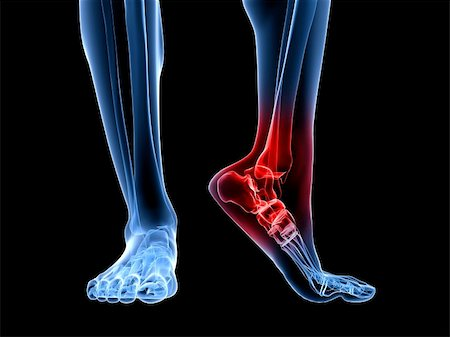 3d rendered illustration of a skeletal foot with highlighted ankle Stock Photo - Budget Royalty-Free & Subscription, Code: 400-04191661