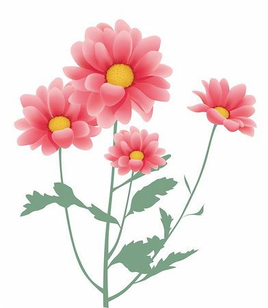 simsearch:400-04697977,k - illustration drawing of beautiful red daisy in a white background Stock Photo - Budget Royalty-Free & Subscription, Code: 400-04201320