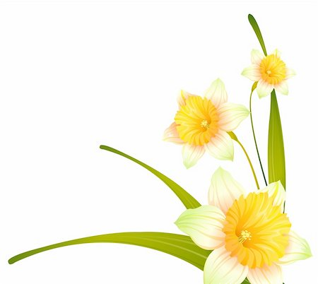 simsearch:400-04697977,k - drawing of beautiful narcissus flower with green branch Stock Photo - Budget Royalty-Free & Subscription, Code: 400-04201945