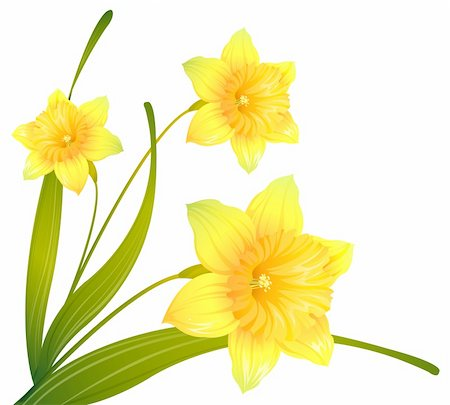 simsearch:400-04697977,k - illustration drawing of some beautiful  yellow narcissus flowers Stock Photo - Budget Royalty-Free & Subscription, Code: 400-04201943