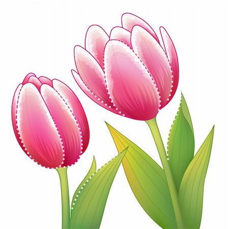 simsearch:400-04697977,k - illustration drawing of beautiful red tulip flower with leaves Stock Photo - Budget Royalty-Free & Subscription, Code: 400-04202433