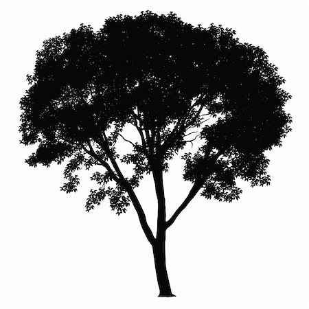 Tree silhouette on white background. Vector illustration. Stock Photo - Budget Royalty-Free & Subscription, Code: 400-04214919