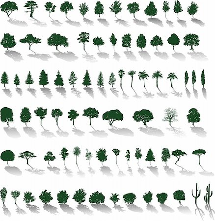 Set of vector silhouettes of trees and bushes with shadows Stock Photo - Budget Royalty-Free & Subscription, Code: 400-04210701